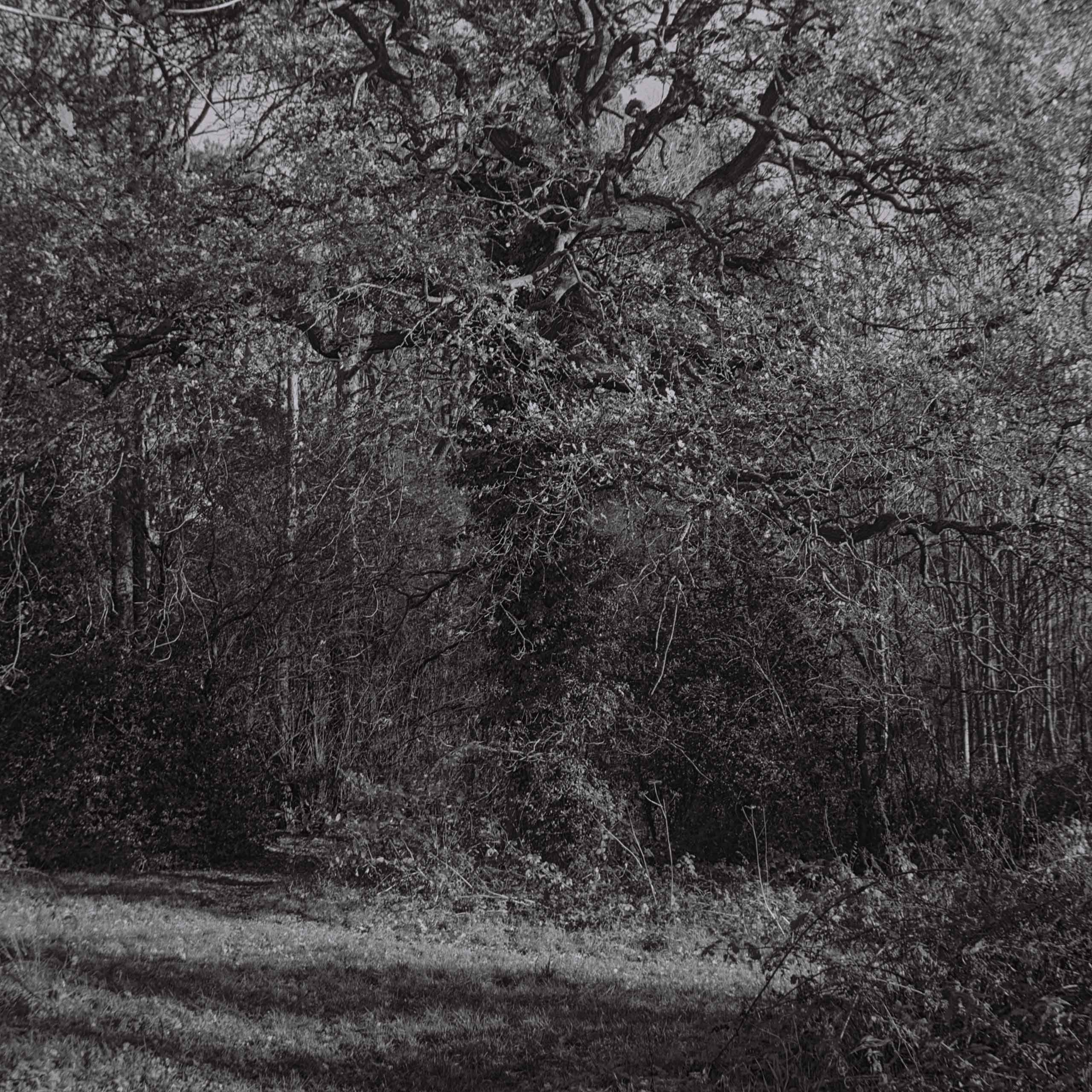 27.-Mother-Oak-3