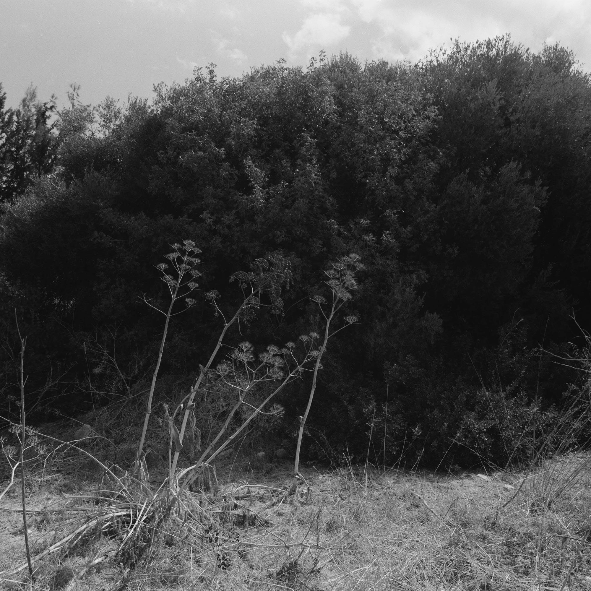 Native Plants of Northern Cyprus
