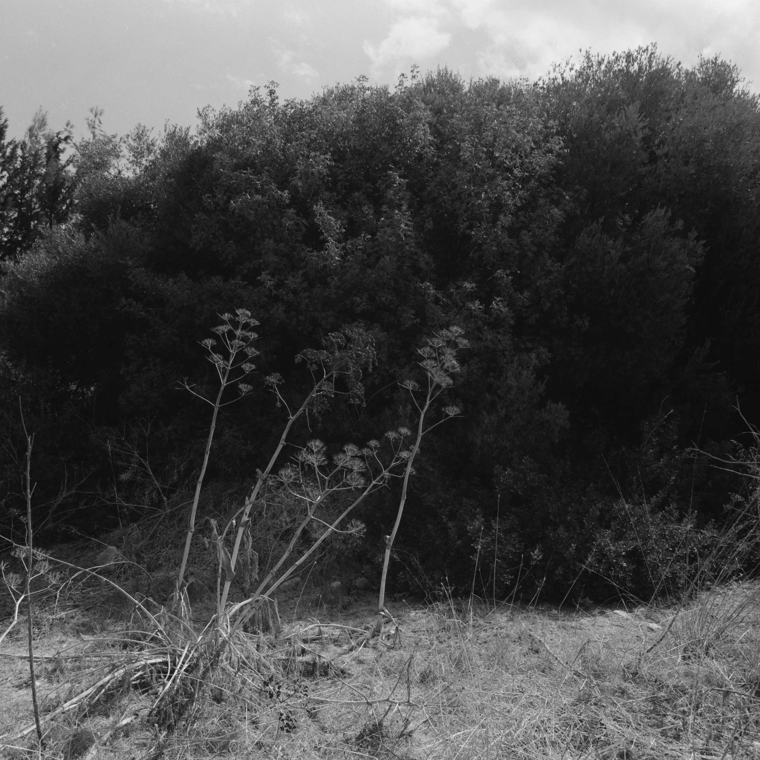 Native-Plants-of-Northern-Cyprus-1