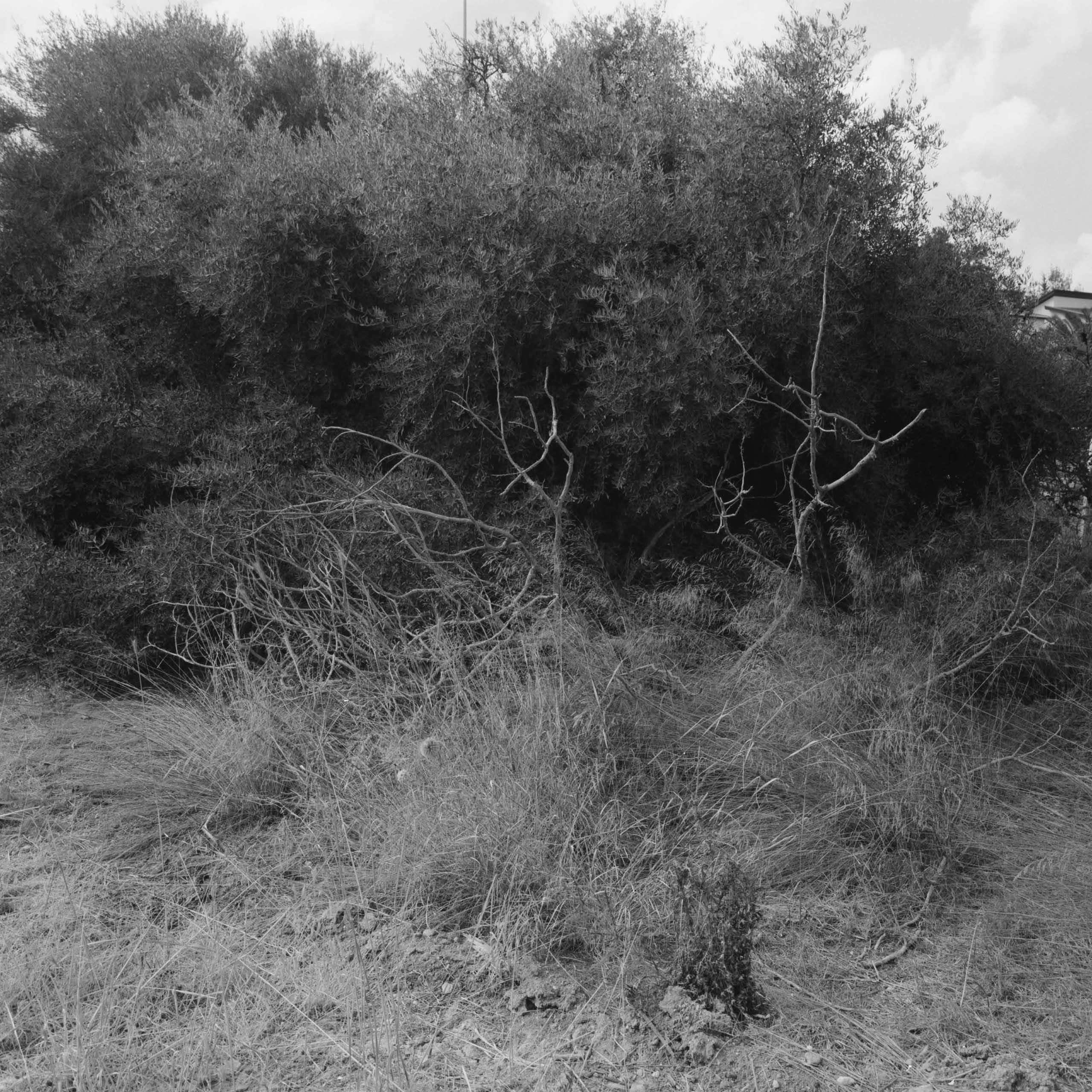 Native-Plants-of-Northern-Cyprus-12