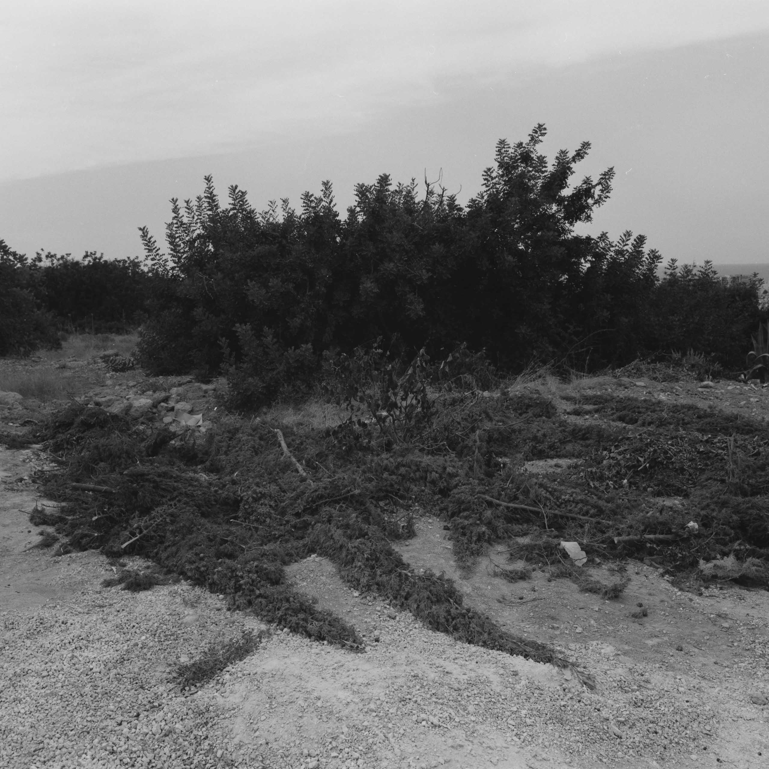 Native-Plants-of-Northern-Cyprus-5-1