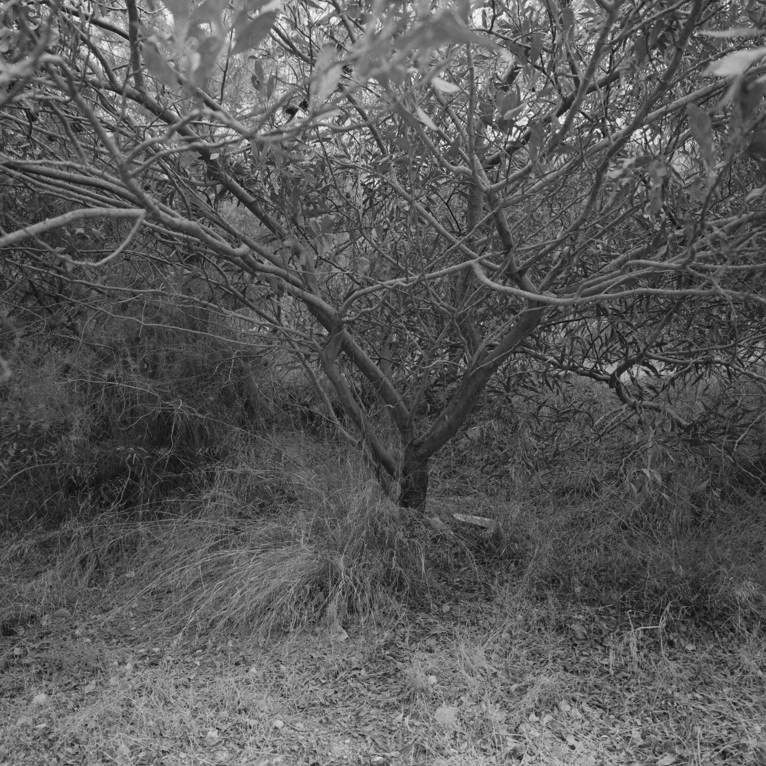 Native-Plants-of-Northern-Cyprus-7