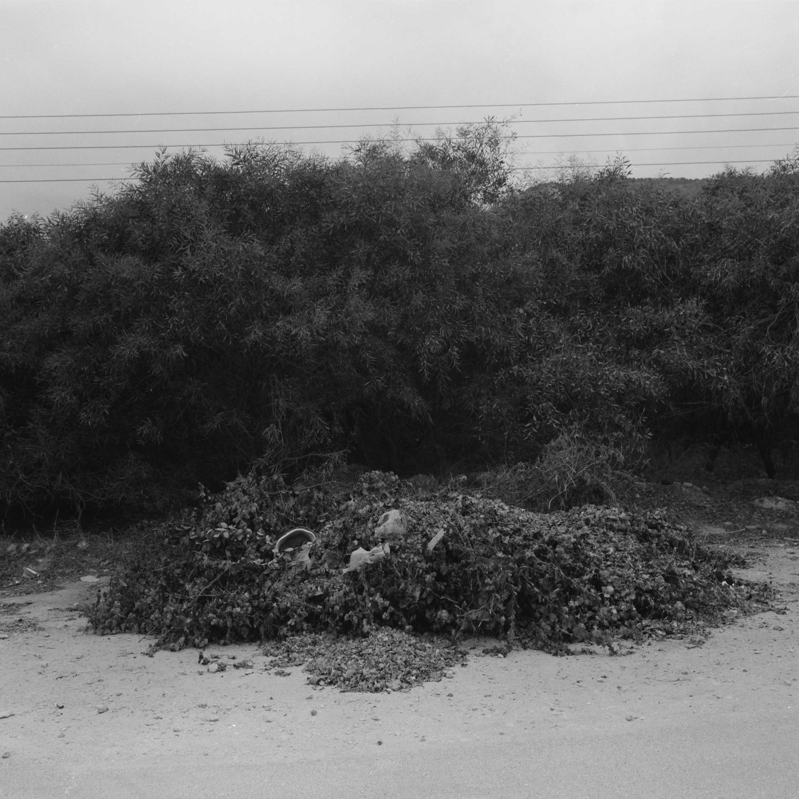 Native-Plants-of-Northern-Cyprus-9